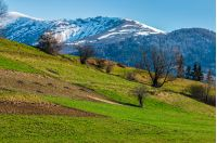 carpathian mountain peaks in snow above green rural meadow in spring season