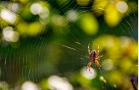 lovely background with spider in the web on beautiful foliage bokeh