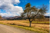 spring has sprung in rural area. tree on agricultural field with yellow weathered grass near the road. snowy peaks of mountain ridge in the distance. nature on sunny day under blue sky with some clouds