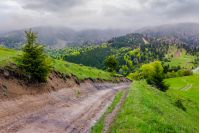 springtime in Carpathian mountains. beautiful scenery on a rainy day with overcast sky. country road runs uphill through grassy hill in to the distance