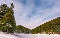 spruce forest in winter. beautiful nature scenery on snow covered meadow in coniferous wildwood