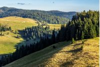 mountain rural landscape. meadow on hill side with coniferous forest before sunset