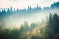 spruce forest on the hill in fog. beautiful nature scenery in mountains. amazing morning weather in autumn .
