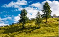 spruce trees and wooden fence on grassy hillside. lovely rural scenery in fine autumnal weather with cloudy sky