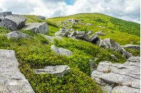 white sharp stones and boulders on the hillside on top of  Carpathian mountain range