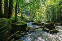 stream among the rocks in the deep forest. beautiful summer scenery.