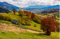 stunning rural landscape in mountains. woodshed and trees with red foliage on grassy hillside and a village in a far distance. gorgeous autumn scenery with ridge under cloudy sky