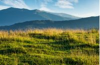 summer scenery of grassy field in mountains. mountain ridge with high peaks in the far distance. beautiful nature of Carpathians