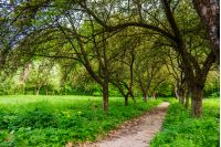 trail  in the shade of fruit trees of green garden near the meadow