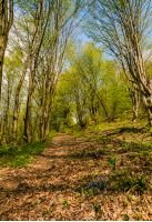 trail through the forest in springtime. walk in fine weather