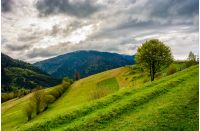 Countryside mountain landscape. trees on a meadow in rural area on overcast springtime day