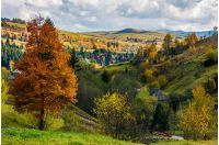tree with yellow foliage in carpathian village. lovely autumnal rural scenery in valley