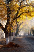 trees in golden foliage on streets. beautiful autumn scenery on old town Uzhgorod, Ukraine