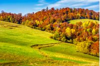 yellow and orange trees on autumn meadow in mountains