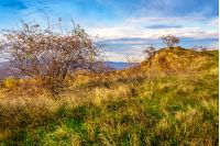 briar bush and orange trees on autumn meadow in mountains at sunset
