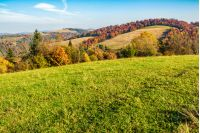 yellow and orange trees on a green meadow in autumn mountains