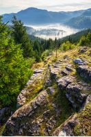 view from a rocky cliff to valley with conifer forest full of fog  in high mountains of Apuseni Natural Park in Romania