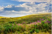 landscape with high wild grass and purple flowers on the top of high mountain