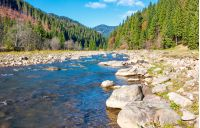 wild mountain river with rocky shore. lovely autumn scenery of Carpathian nature among the ancient forests of Synevyr National Park