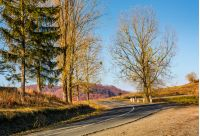 winding road in late autumn mountains. lovely transportation scenery