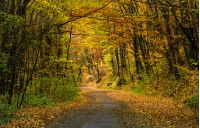 winding road through dark autumn forest. beautiful nature scenery with lots of colorful foliage on hillside