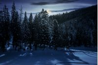 winter spruce forest at night in full moon light. beautiful scenery of magic landscape