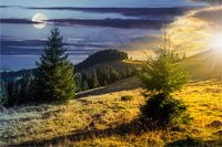two fir trees on hillside of mountain range with coniferous forest and meadow. composite image day and night with full moon