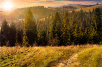 composite image of  hillside of mountain range with coniferous forest and meadow path in sunset light with rainbow