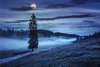 fir tree in fog by the road through  hillside meadow in high mountains at night in full moon light