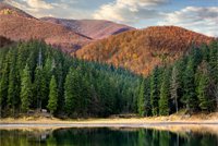 lake near the pine forest in orange autumn mountains