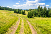 composite panoramic image mountain landscape.  curve path through the meadow on hillside near coniferous forest.