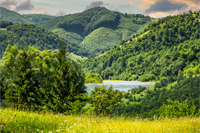composite mountain summer landscape. pine trees on hillside meadow with wild flowers near the river in mountains