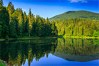 landscape by the lake in the early morning. coniferous forest near the lake and the forest mountain
