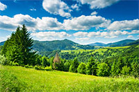 green meadow with fir trees in the mountainous area