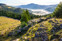 view from a rocky cliff to full of fog valley with conifer forest in high mountains of Apuseni Natural Park in Romania