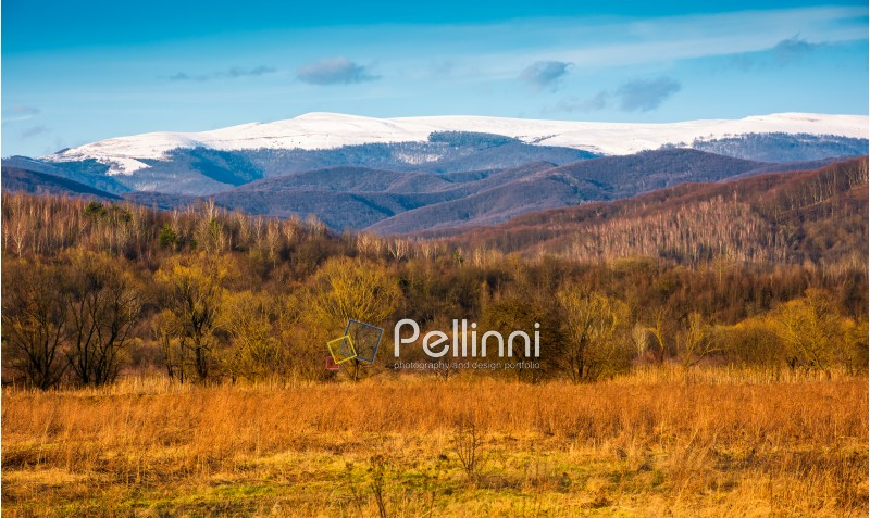 beautiful springtime scenery in Carpathian mountains. snowy top of Polonina Runa mountain ridge in the distance