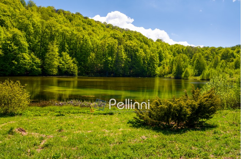 shore of a pond among the forest in springtime. lovely nature scenery in mountains
