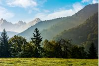 Spruce forest on the hillside meadow in High Tatras mountain ridge. Gorgeous scenery mountainous scenery in early autumn