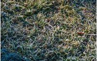 fallen leaves on a frosted grass. lovely nature background. view from above