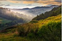 idyllic summer landscape. cold morning fog on hillside in mountainous rural area before sunrise