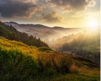 idyllic summer landscape. cold morning fog on hillside in mountainous rural area at sunset
