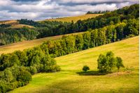 forest on rolling hills with grassy meadows under cloudy autumnal sky. beautiful countryside in fine autumn weather