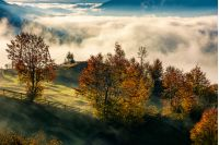 orchard with reddish foliage behind the fence on hillside in autumn mountains. gorgeous countryside with rising fog in valley
