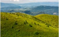 grassy meadow on hillside in summer time. lovely nature of Carpathian mountains