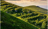grassy meadow on mountain slope at sunrise. beautiful mountainous landscape background