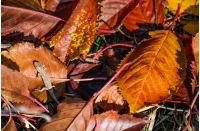 lizard in fallen brown foliage in autumn. lovely nature background. view from above