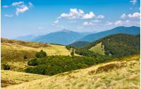 lovely mountainous landscape in summer. scenery with forested hills and grassy meadow under the blue sky with fluffy clouds