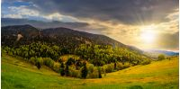mountain landscape. hillside with trees on green grassy meadow near foggy mountains under overcast sky at sunset