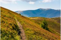 path though mountain hills and ridge. beautiful scenery with spruce tree on a slope in fine weather on late summer day