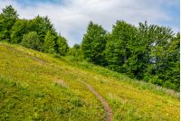path through slippery slope with forest. natural summer travel background